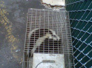 Flint Wildlife Removal
