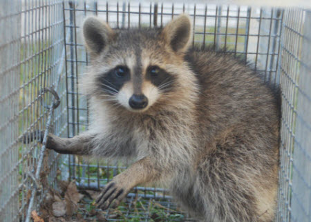wildlife removal prices