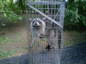 Wildlife Removal Company Detroit