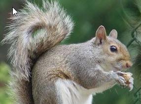 Nuisance Squirrel Service Michigan