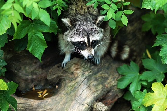 Novi Professional Wildlife Removal